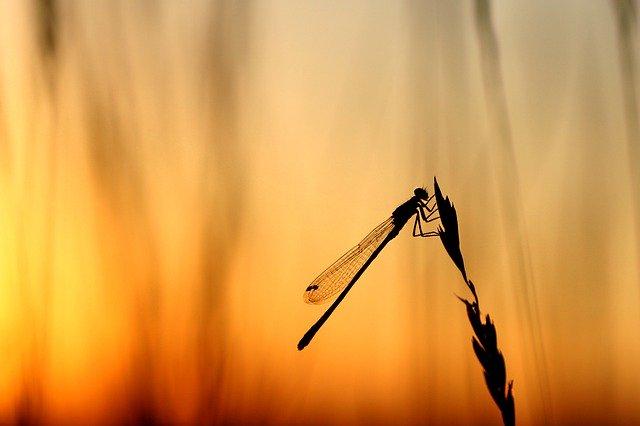 pelusa y libélula